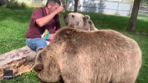 Bears Enjoy Marshmallow Treat With Wildlife Center Worker