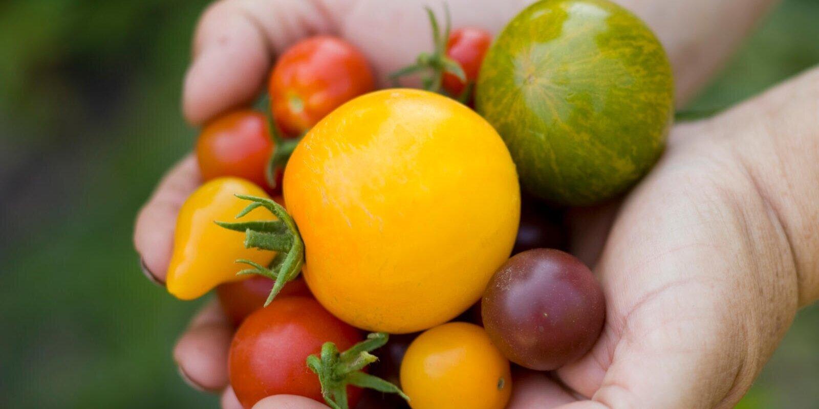 Allrecipes Kitchen Garden Guide