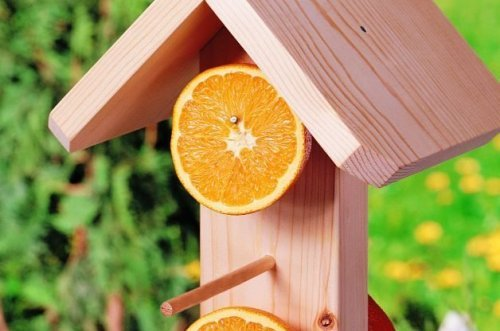 How to Make Easy DIY Bird Feeders