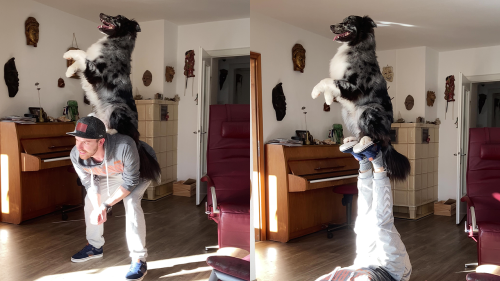 'German Man Attempts Cute Tricks with Australian Shepherd'
