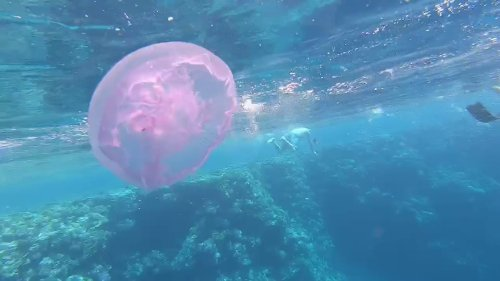 Divers encounter giant jellyfish