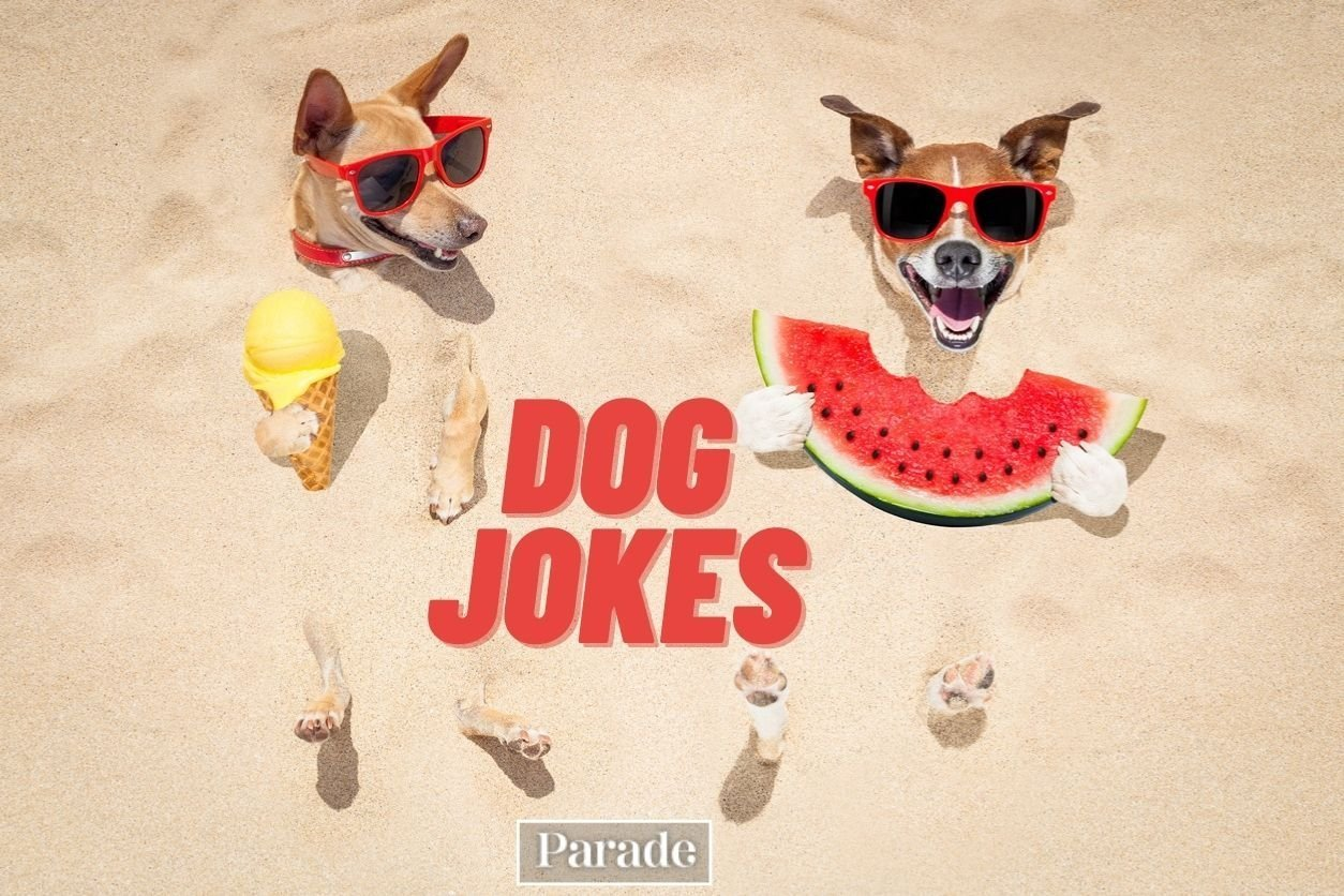 75 Funny Dog Jokes That Are Totally Stupid