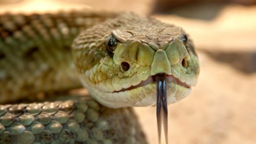 A Snake Trapped Two Men Indoors, Watch The Video & Get Other Crazy Snake Stories