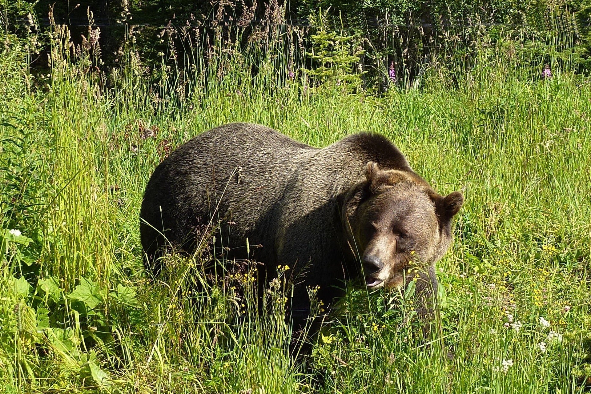 Lone man survives week of grizzly attacks before miraculous rescue