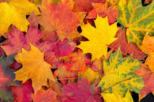 The 25 Best Places to Spot Fall Foliage in America