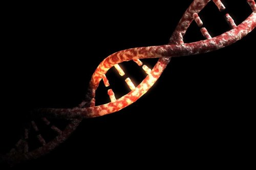 Just 1.5 to 7 per cent of the modern human genome is uniquely ours