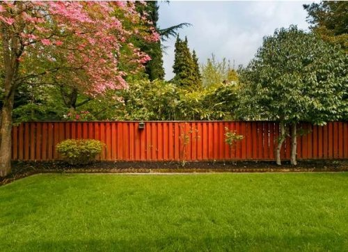 Trees and Property Lines: 8 Things All Neighbors Should Know