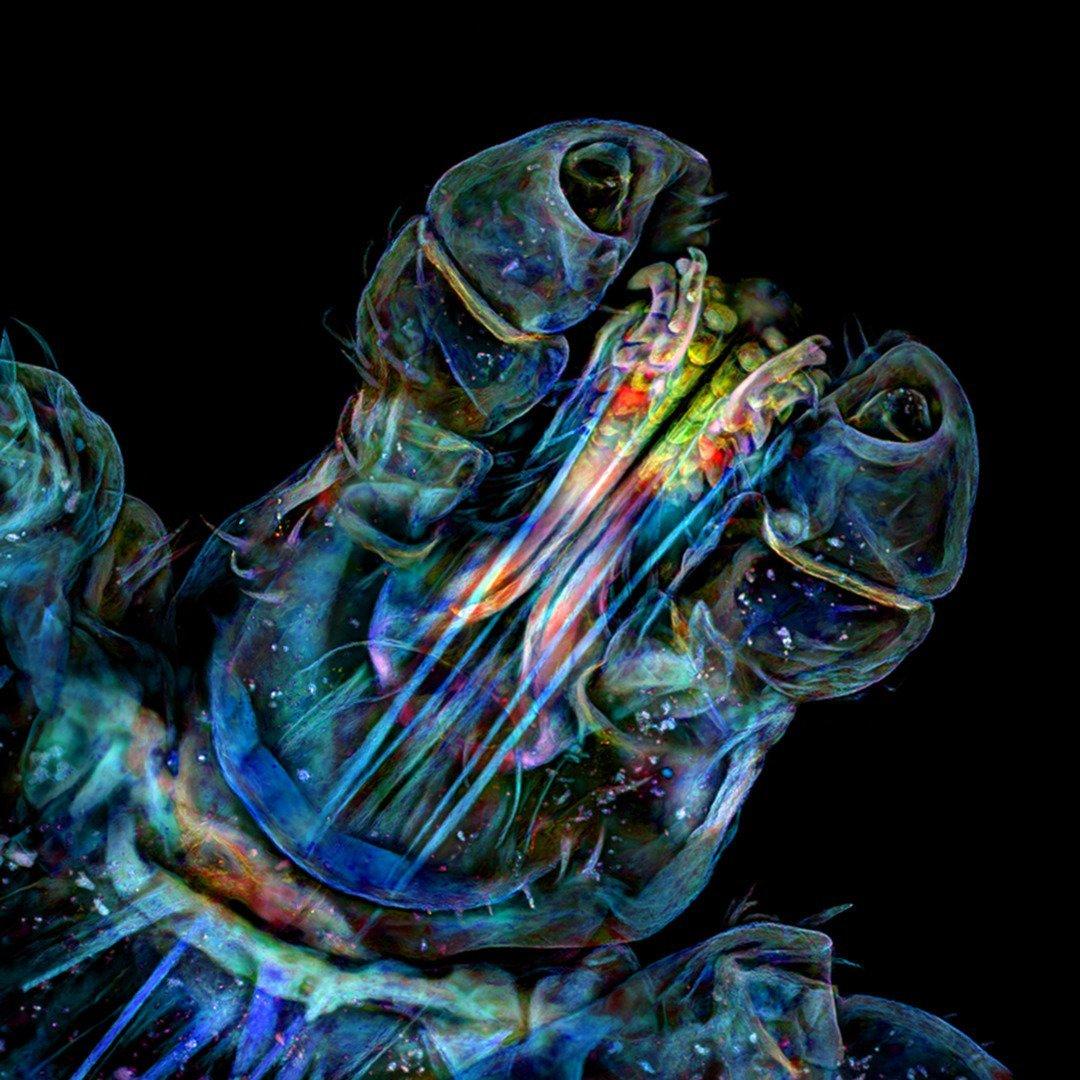 20 extraordinary microscopic photographs that peer beneath the surface