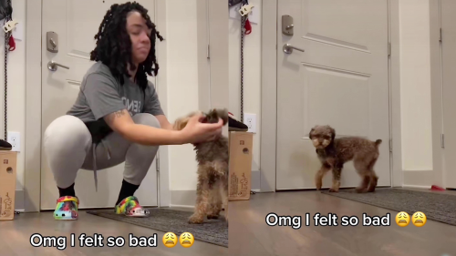 'Pretending to Forget Dog at Home After Getting him Ready for a Walk'