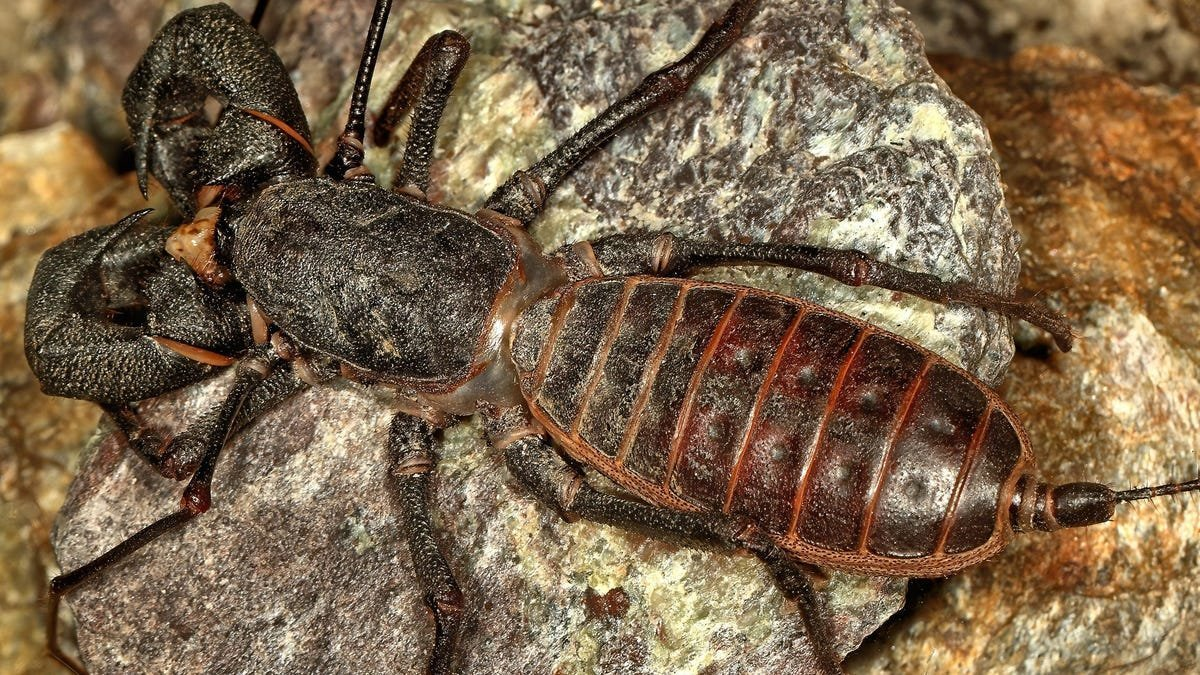 'Acid-Spitting Land Lobsters' and 12 Other Terrifying, Weird, Amazing Creatures