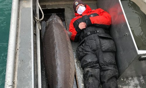 Century-old 'real-life river monster' caught is U.S.