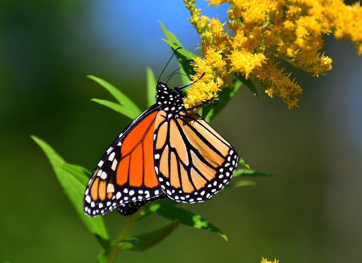 How to Attract More Pollinators to Your Garden This Season