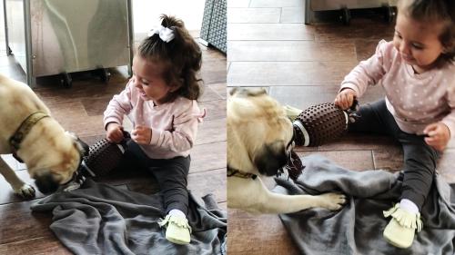 'Toddler Enjoying a Game of Tug-of-War with Dog'