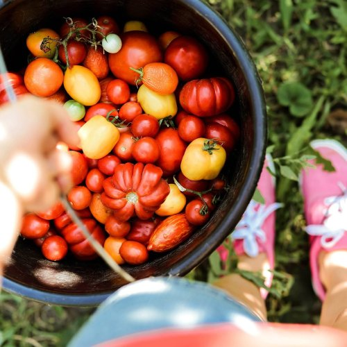 Jumpstart Your Garden
