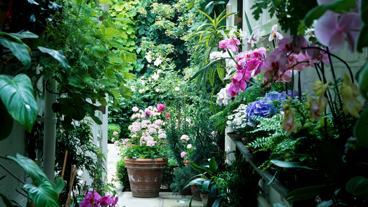 Get green fingers with our gardening guide