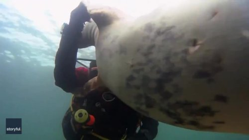 'More Than Words': Diver Wowed as Seal Clasps His Hand