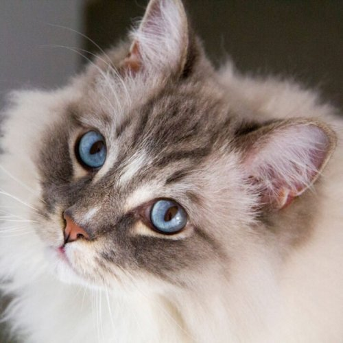 Best Cat and Dog Breeds For Allergy Sufferers