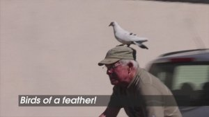 Birds of a Feather! French Retiree Befriends Pigeon Whom He Saved!