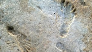 Earliest Human Footprints In North America Found in New Mexico