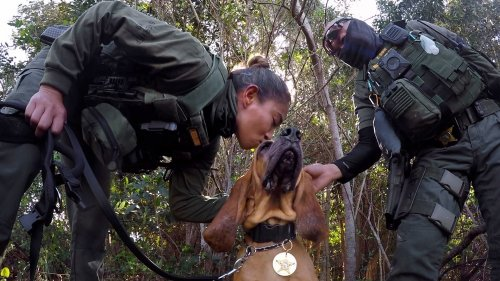 For these K-9 bloodhounds, it's a high-stakes mission of lost and found