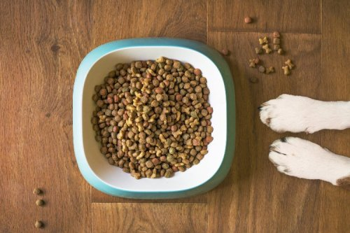 Ways to Improve Your Dog's Life Today