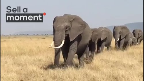 Tourists on Safari Encounter Elephant Herd