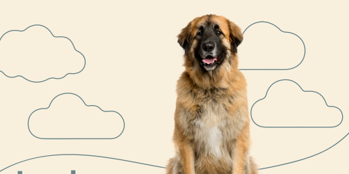 Guten Tag! Meet These 13 German Dog Breeds of All Shapes, Sizes