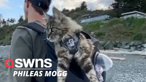 Majestic cat explores sites of rural Canada, snuggly tucked into BACKPACK
