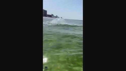 'He Got It, Dude!' Dolphin Steals Fisherman's Catch