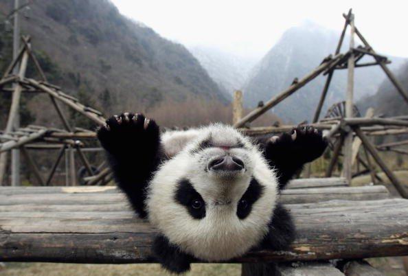 Animal Photos From Around the World