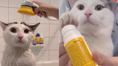 'This Cat's Bedtime Routine is the Most Adorable Thing You'll See Today '