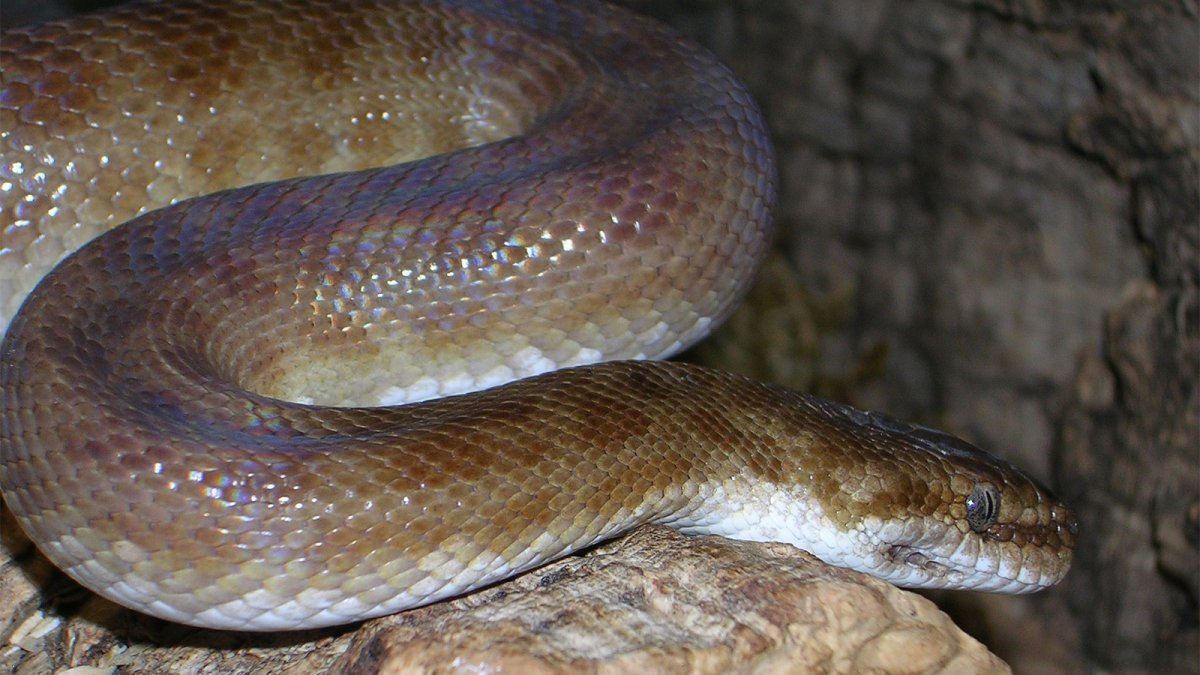 Why a Spotted Python Should Totally Be Your Next Pet — Plus Other Exotic Pets
