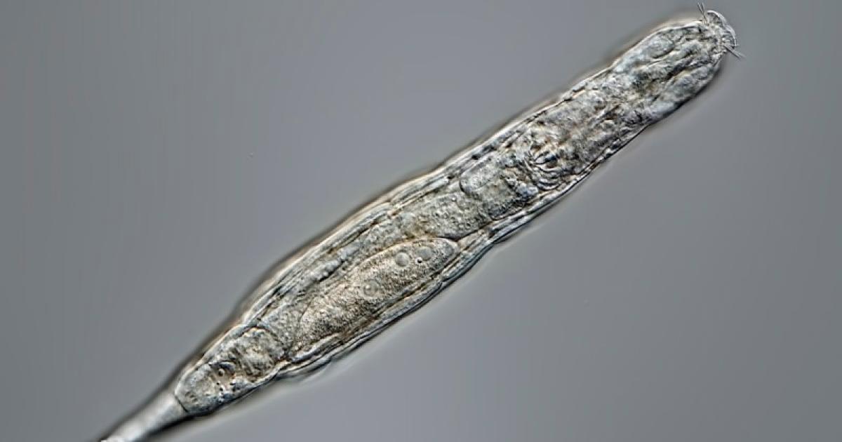 Bringing ancient microbes back to life