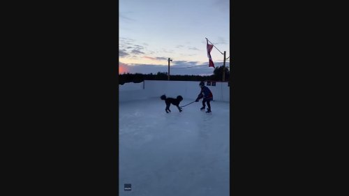 Ruff Play: Dog Carves It Up With Owner On the Ice