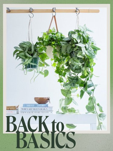 How to hang plants indoors, according to someone who does it for a living