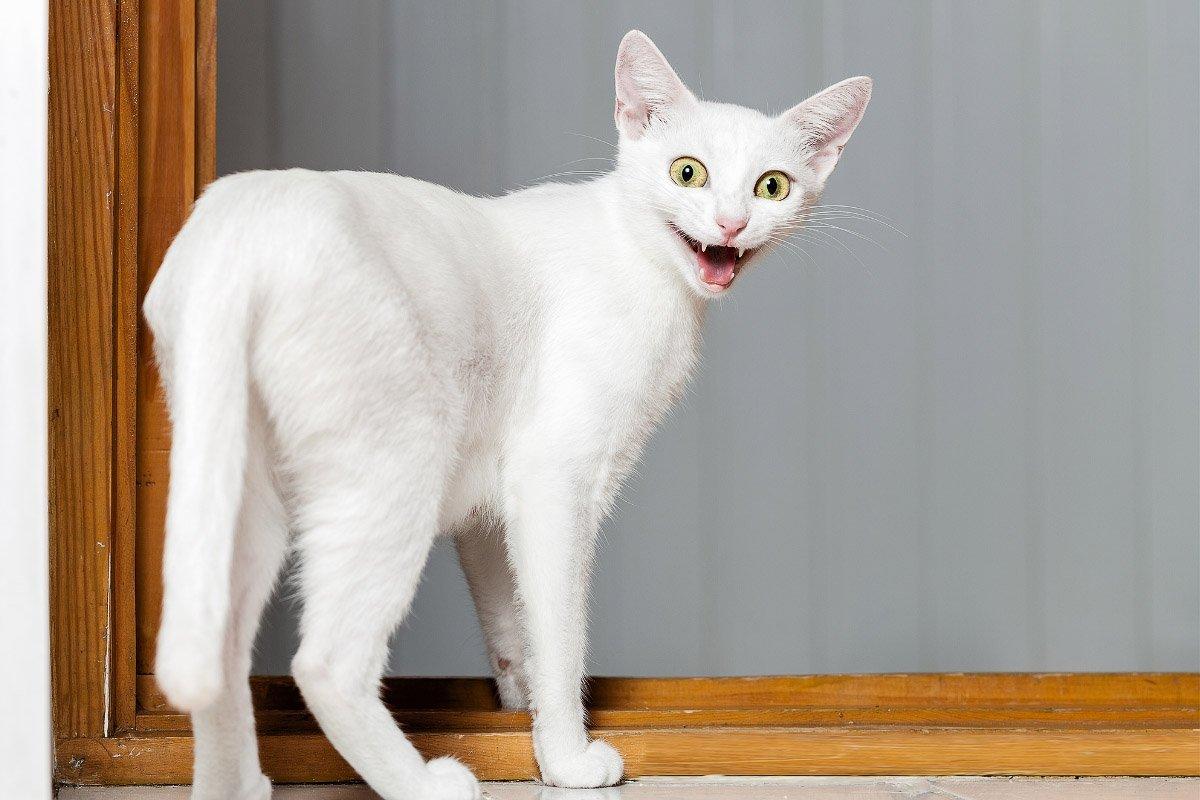 8 Reasons Cats Pant + More Strange Cat Stuff