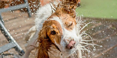 Cool for the Summer: 10 Ways to Keep Your Pets Safe During the Hottest Months
