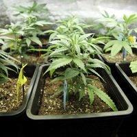 Surprising Facts About Marijuana