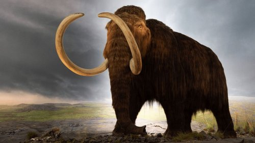 What If Mammoths Never Went Extinct?