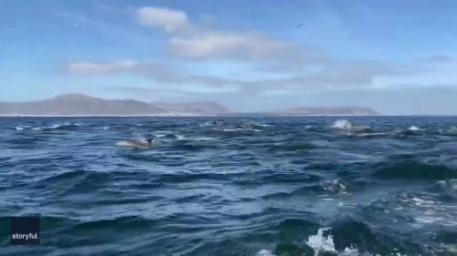 'Super Pod' of Dolphins Swims Alongside Boat Off South Africa Coast