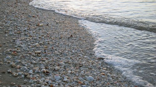 Where Have All the Seashells Gone? — Plus Other Conservation Issues