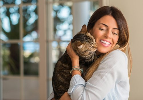 What Does it Mean When Your Cat Starts Grooming You?