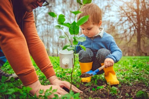 Garden Tips You Need to Know