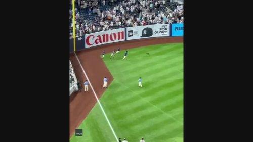 Crowd Cheers as Loose Cat Evades Capture During Yankees Game