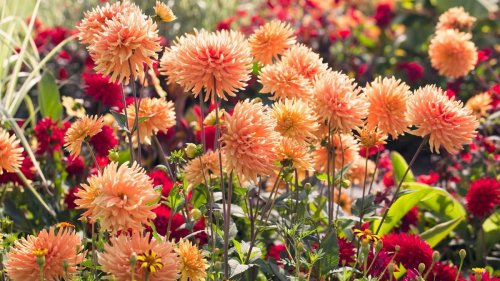 This is what you should be planting in August