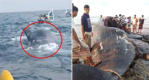 Fishermen make 'wonderful' $2 million find in stomach of whale