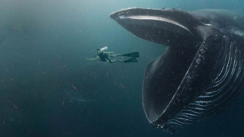How to Survive Getting Swallowed By a Whale