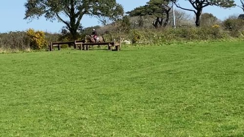 Racehorse trips over hurdle