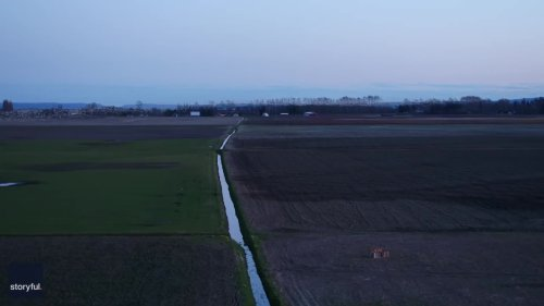 Drone Footage Captures Snow Geese Flying in Formation Over Northwest Washington