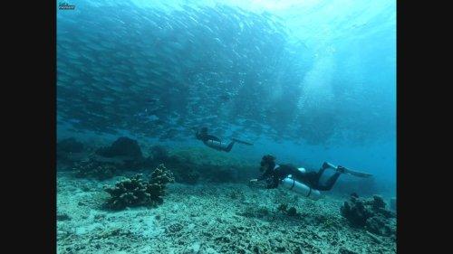 Divers swim towards jackfish storm